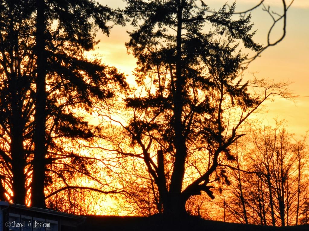Golden-light-in-forest-tangle