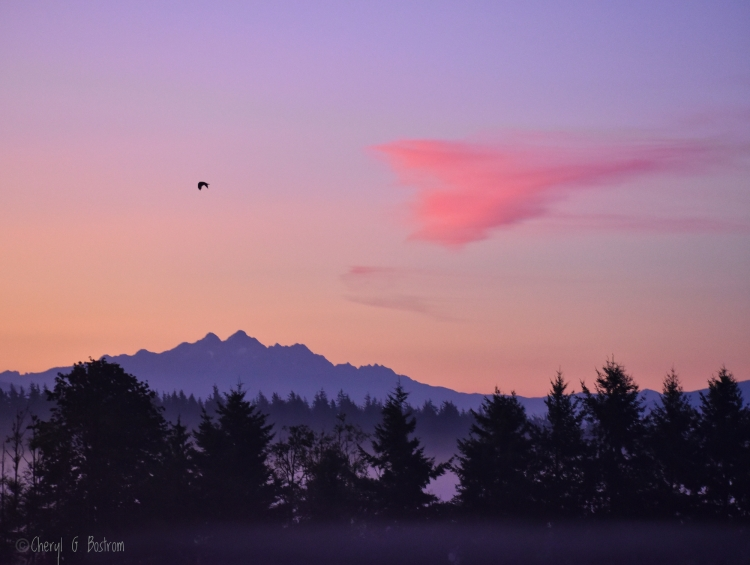 Pink heart cloud and bald eagle fly above mountain at sunrise