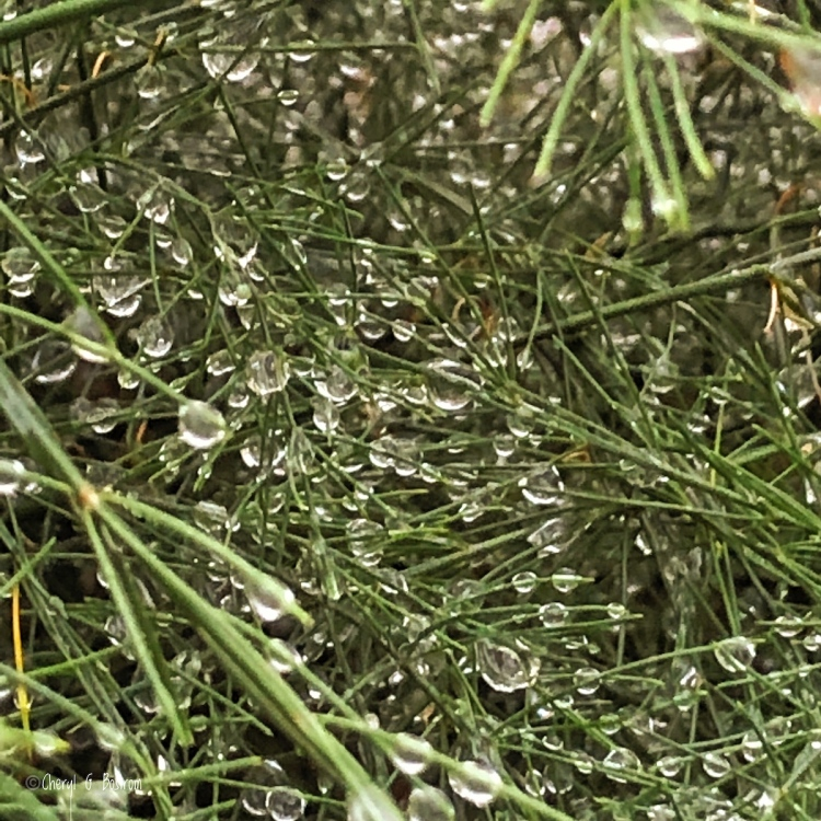 Dense raindrops in green foliage