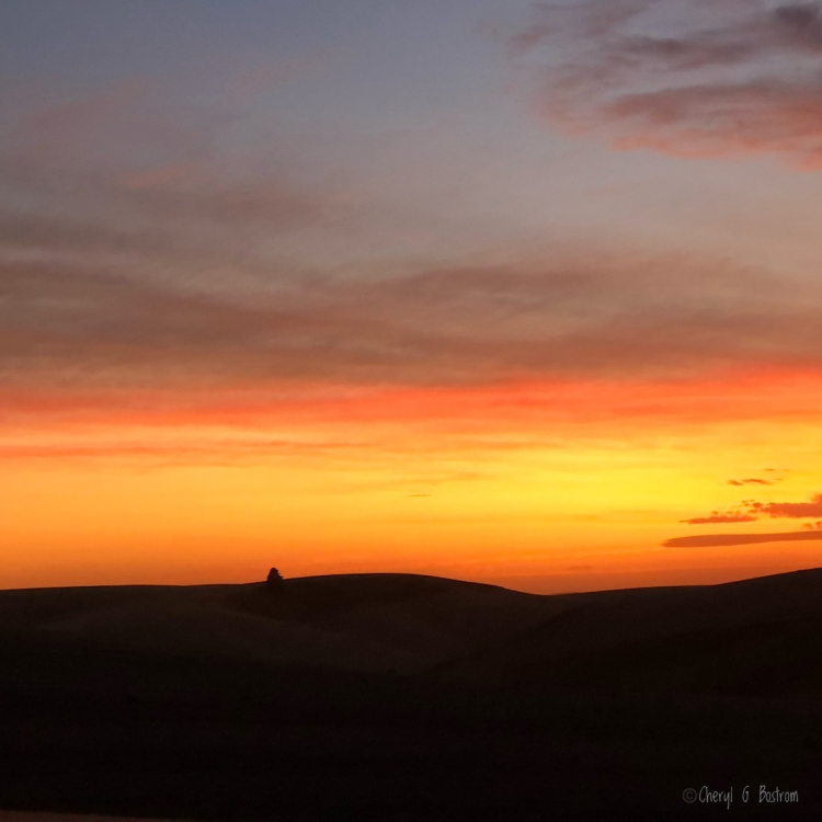 lone tree silhouetted in Palouse sunset