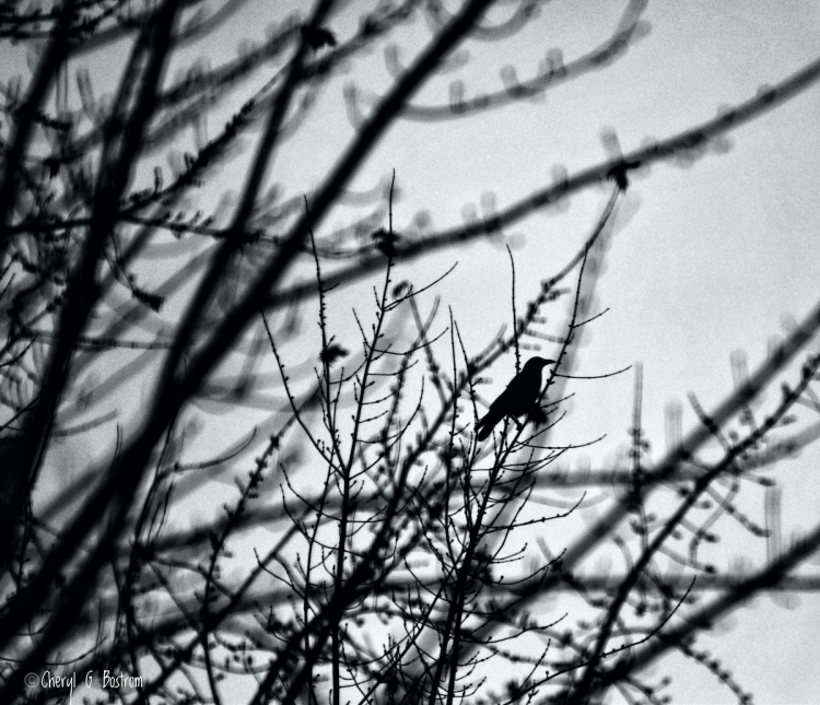 Crow and bare tree branches, silhouetted