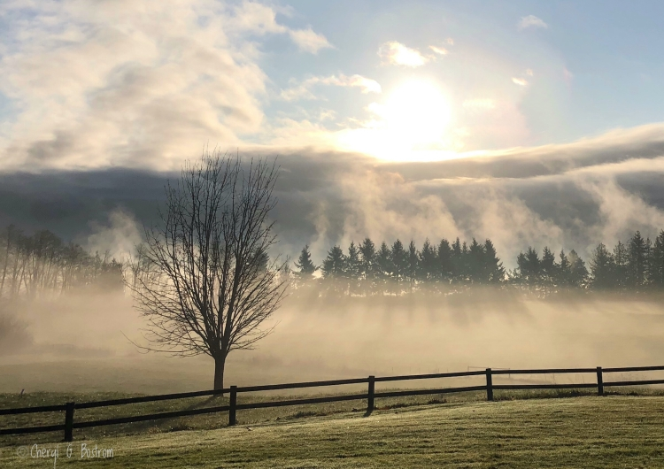 Stark tree and fence in front of foggy fields with sun