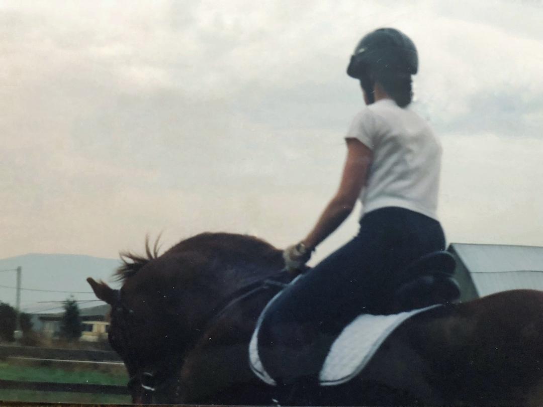 Sorrel gelding in soft, round frame