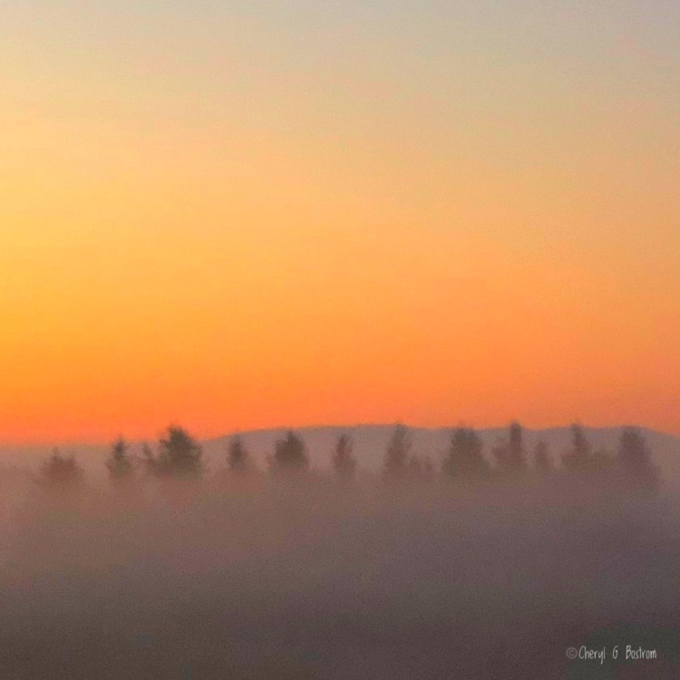 Fog nearly obscures row of evergreens at sunrise