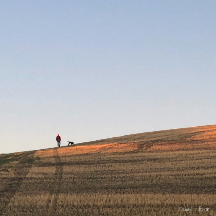 man walks stubble field hilltop with black dog