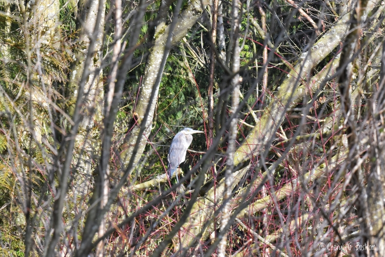 Heron huddles in forest