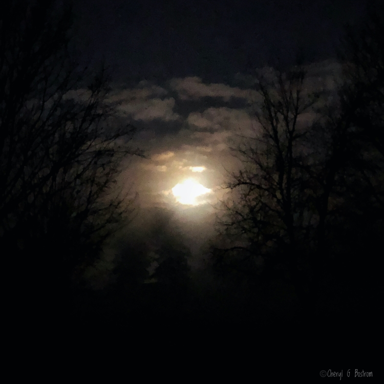 foggy-moonset-in-crowding-dark-forest