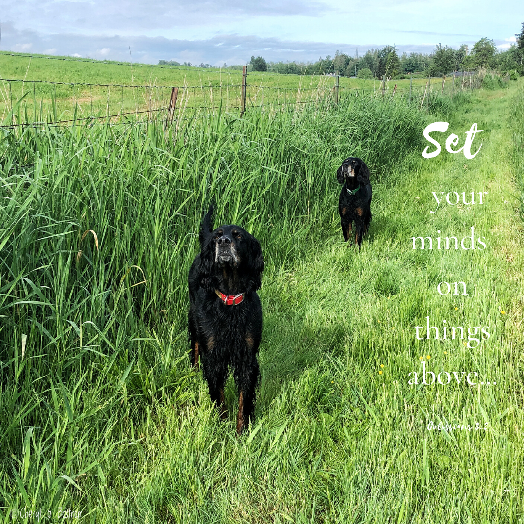 Gordon-setter-Air-scenters-Bible-verse