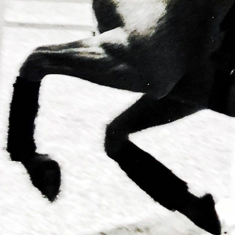 Horse's feet galloping