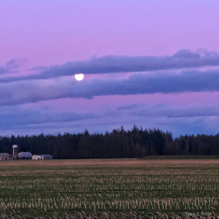 Full-moon-rises-over-farm