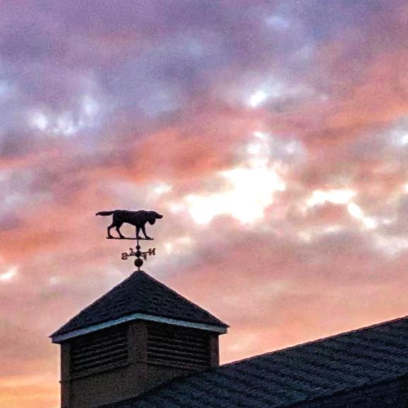 weathervane of pointing Gordon Setter against sunset sky