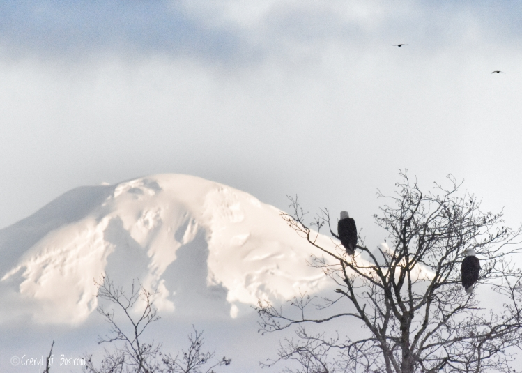 white-topped-mountain-and-eagles