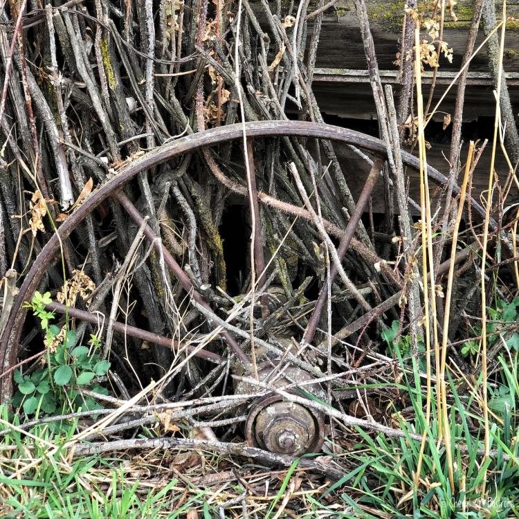 Abandoned wagon overgrown with thornbushes