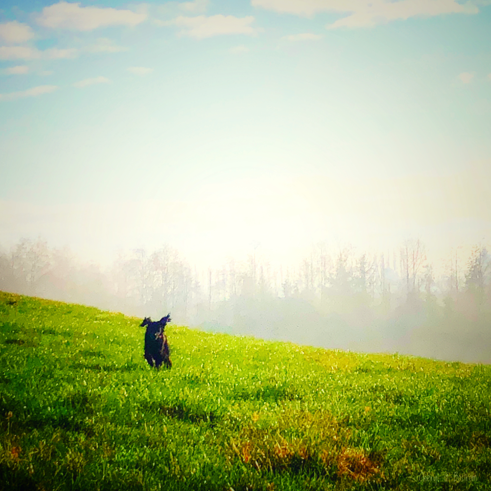 Dog-leaves-fog-for-green-field