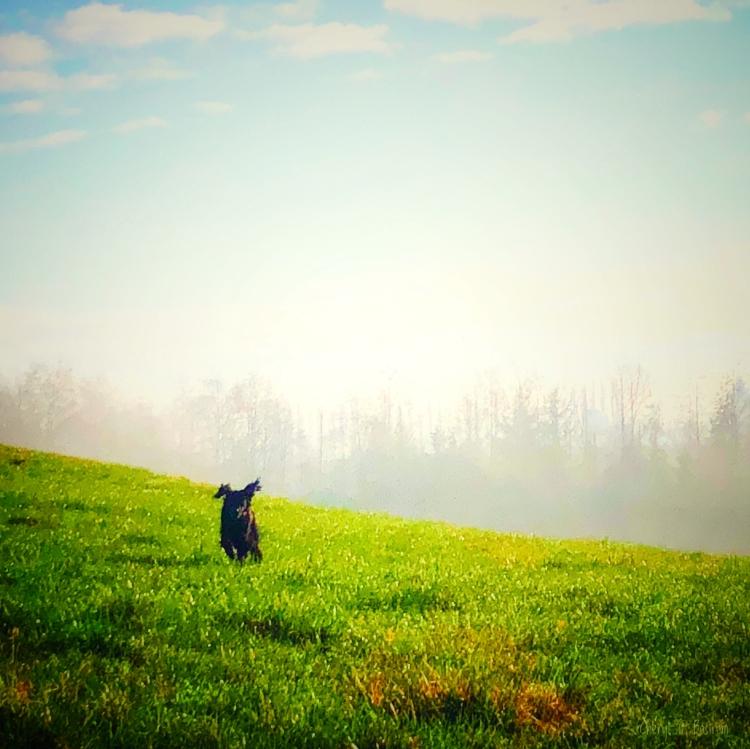 Dog-leaves-fog-for-green-field