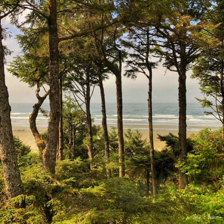 Pacific Ocean through windswept evergreen trees