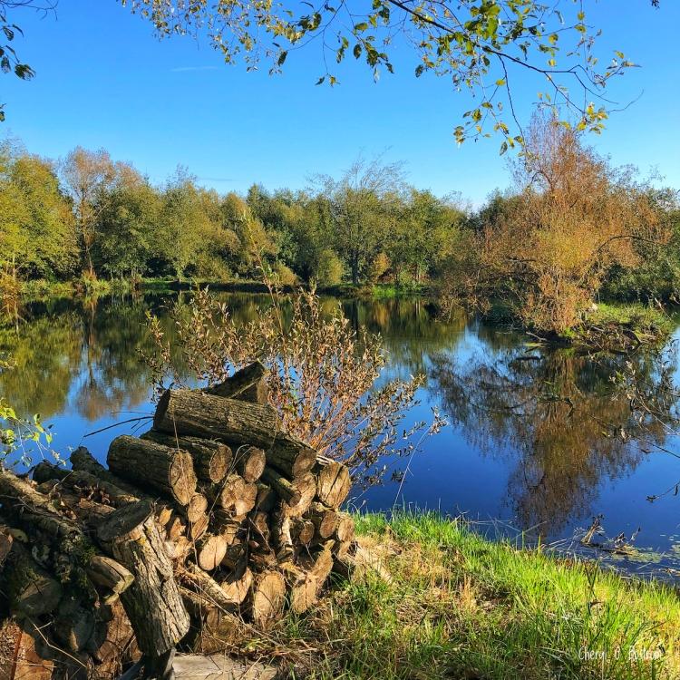 abandoned woodpile beside pond