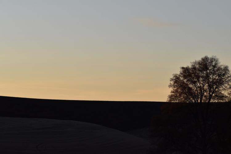Horizon, tree and evening sky