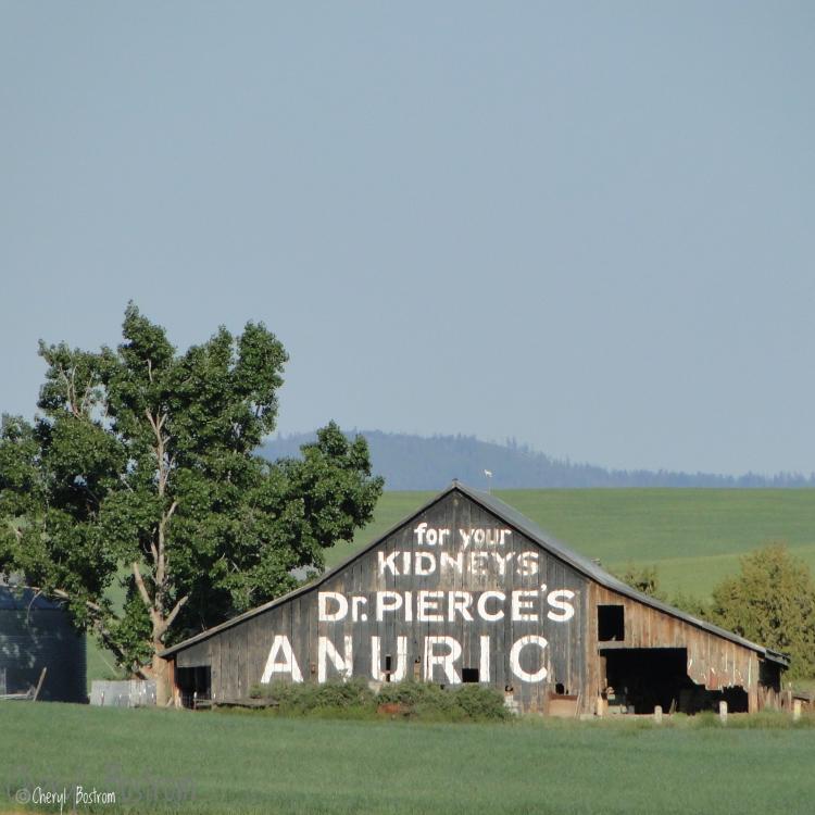 Dr. Pierce's anuric barn.jpeg
