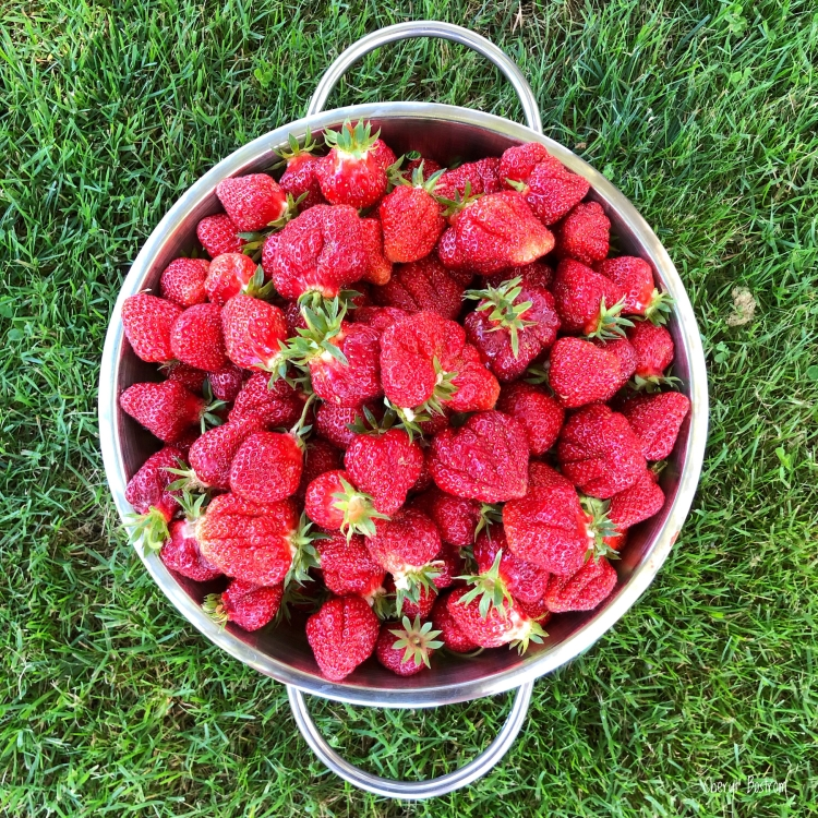ripe-strawberries-in-colander-on-green-grass