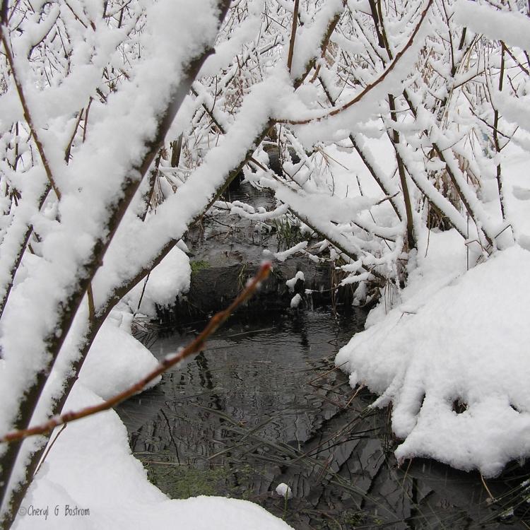 small-creek-flows-through-snowy-forest