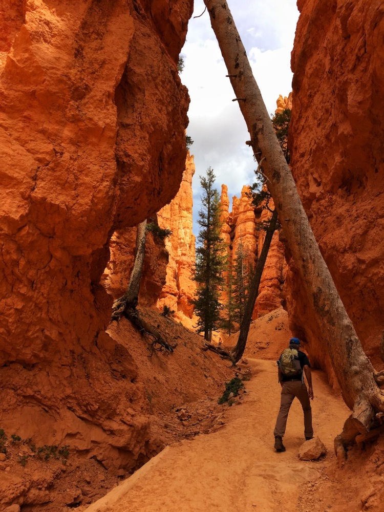 man hikes through narrow red rock canyon under bars of leaning trees