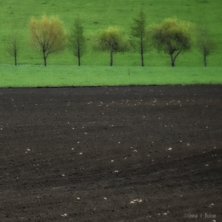 sleepwalking-past-row-of-blurred-trees-in-green-field