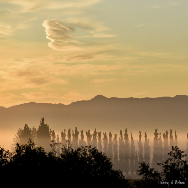 Golden misty late summer sunrise over mountains and poplar row