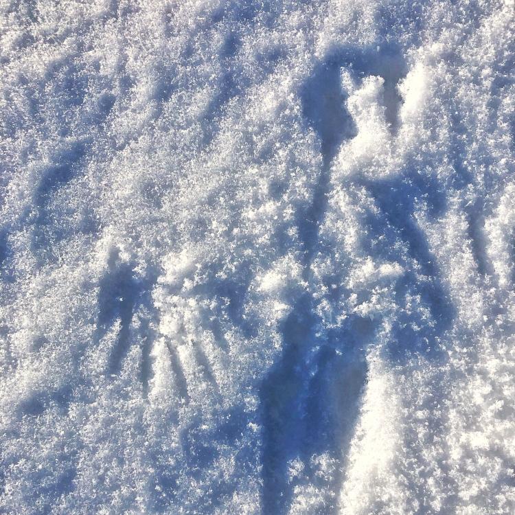 Bird print in snow.
