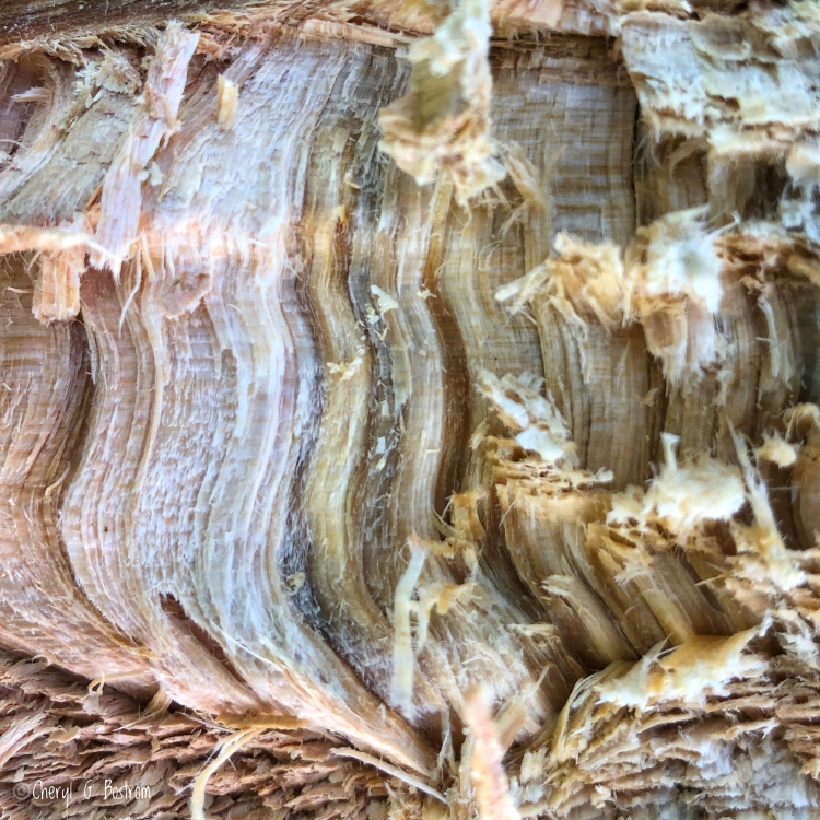 Split firewood looks exactly like roast turkey