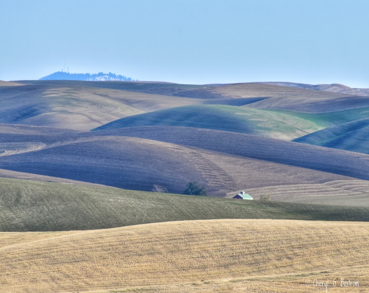 Green barn roof peeks from Palouse hills