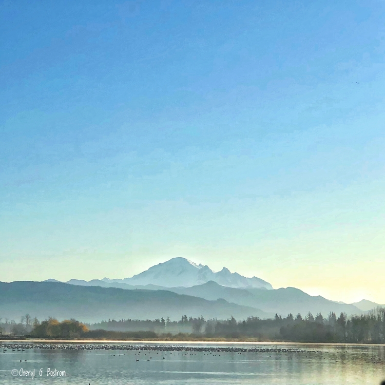 Waterfowl flocked on Wiser Lake with Mt. Baker and blue sky overhead