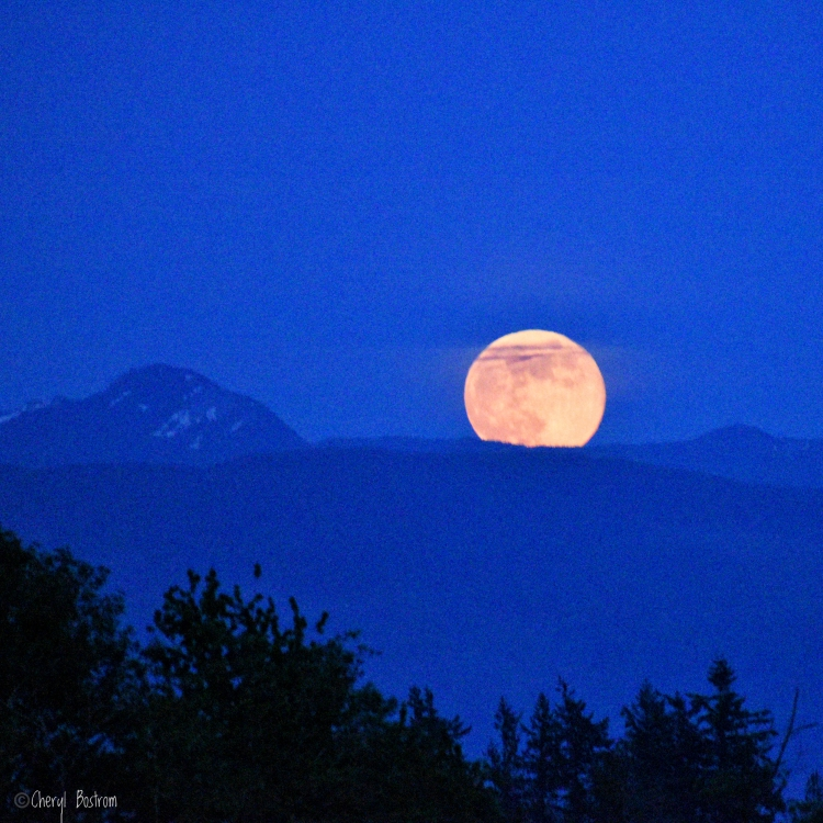 May moon-1.jpeg