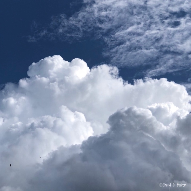 two eagles soar in front of huge cumulus cloud and deep blue sky