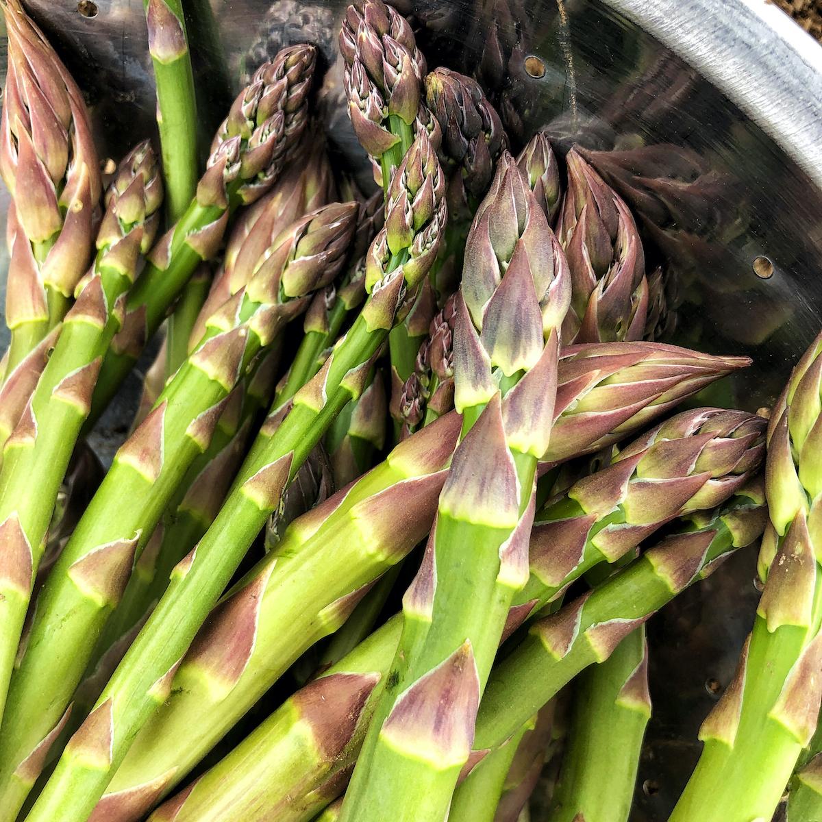 New-spears-asparagus -he-makes-ward-ceas