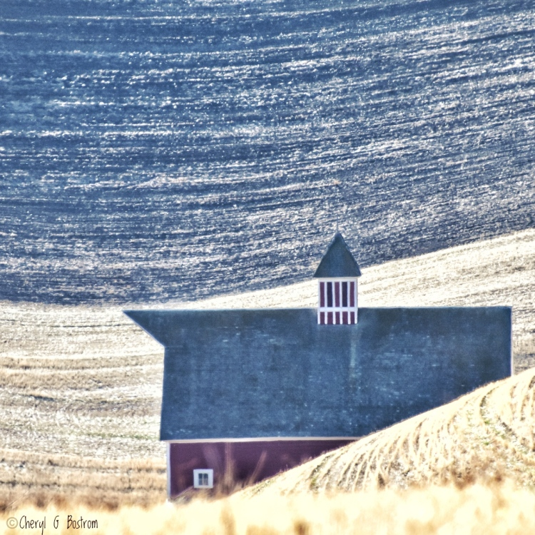 striped cupola tops historic barn in wheat field