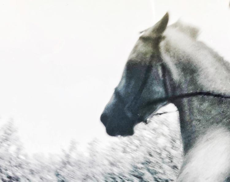 Old Whitey - Civil War Horse