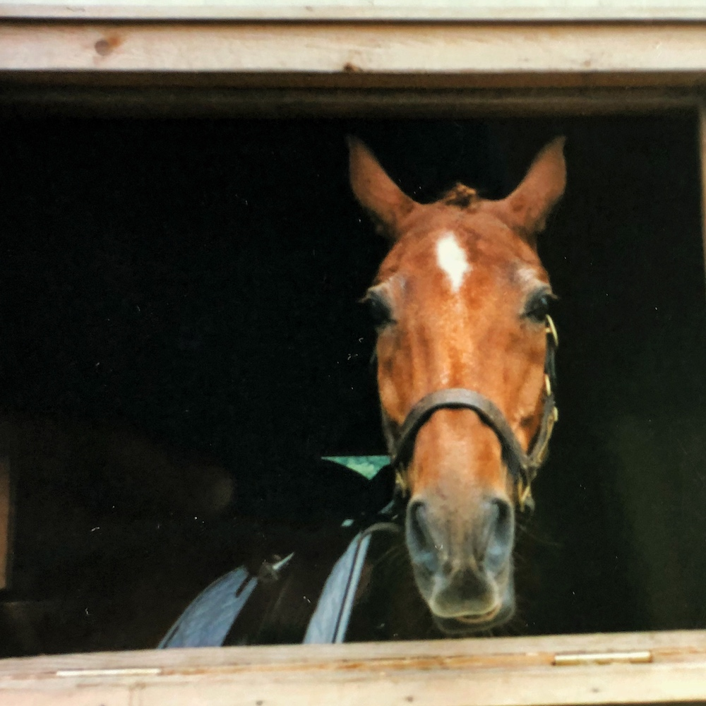 Horse looking out stall window