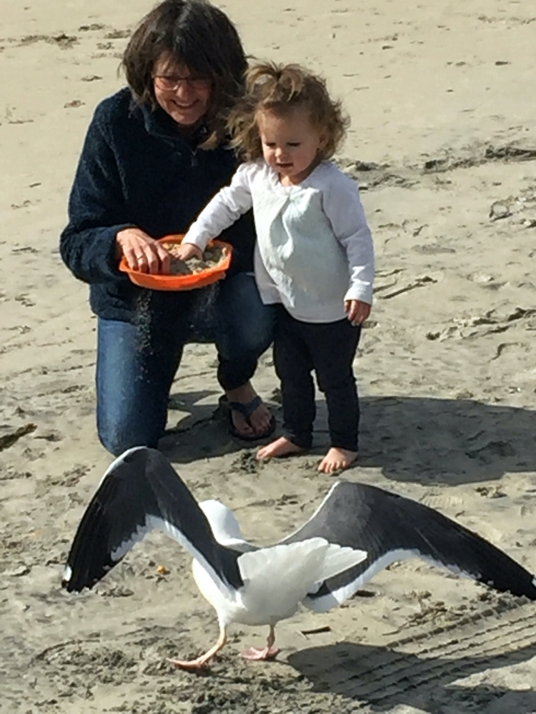 Woman feeds gull with granddaughter on beach