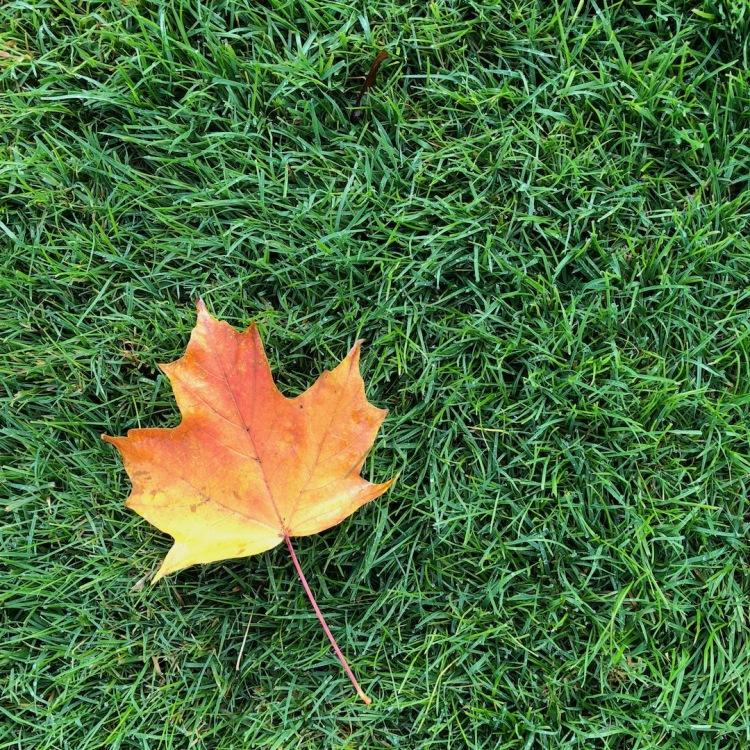 Orange leaf on green grass