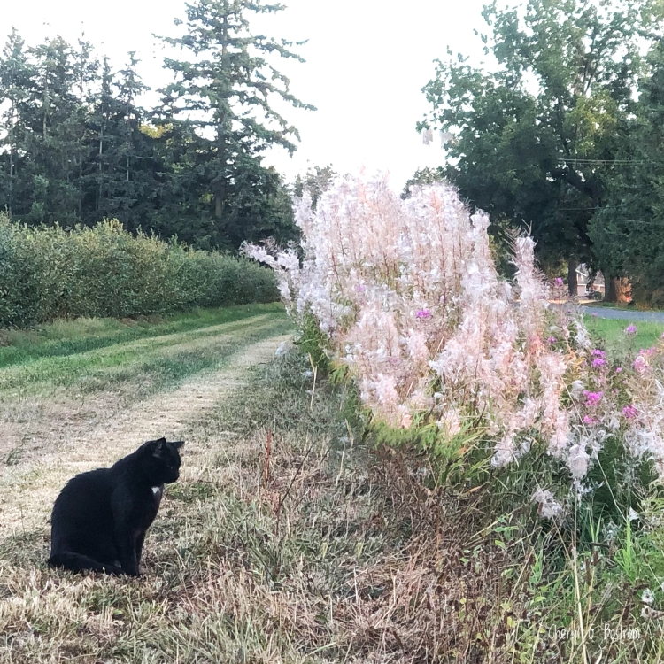 Cat sitting near smoky fireweed filling ditch