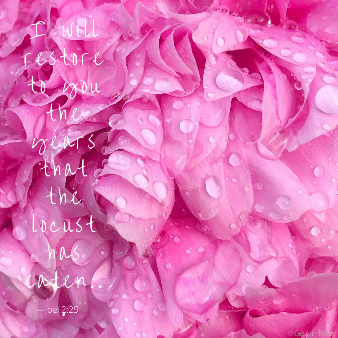Fresh-raindrops-on-peony-petals