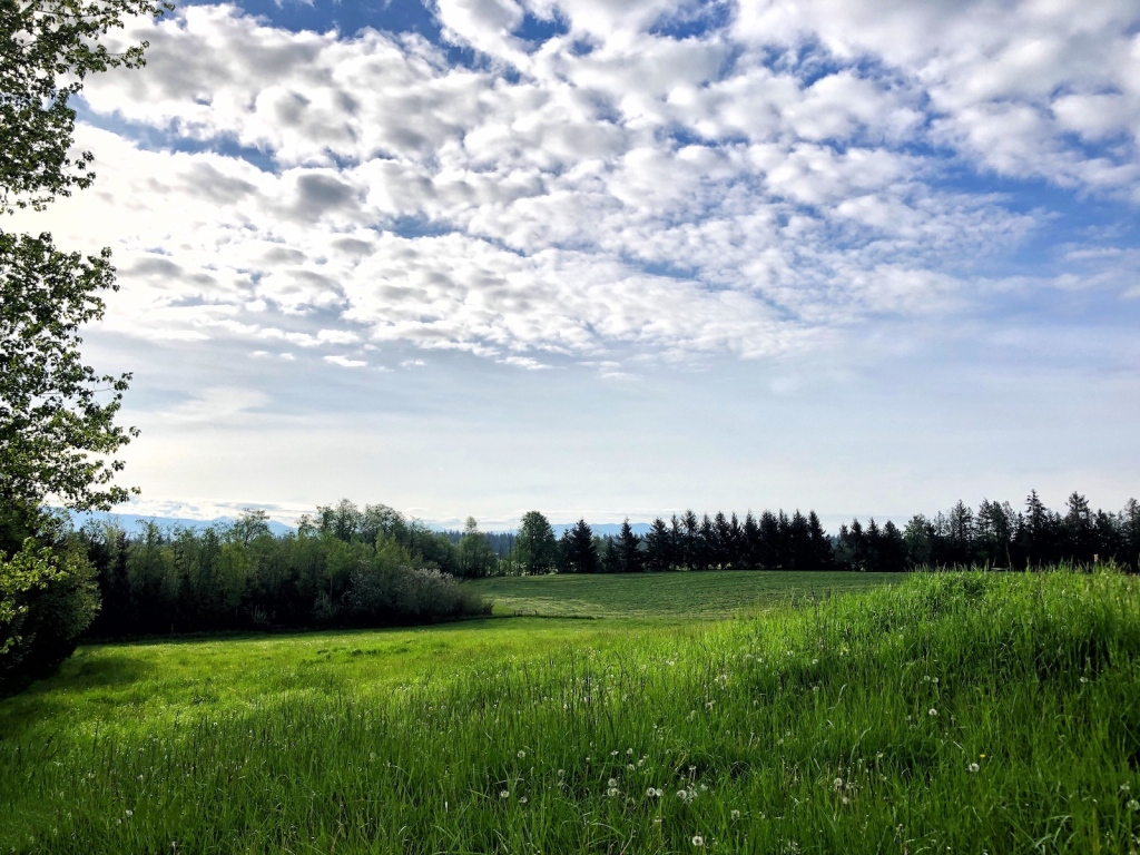 rolling-green-pastures-with-fleecy-clouds