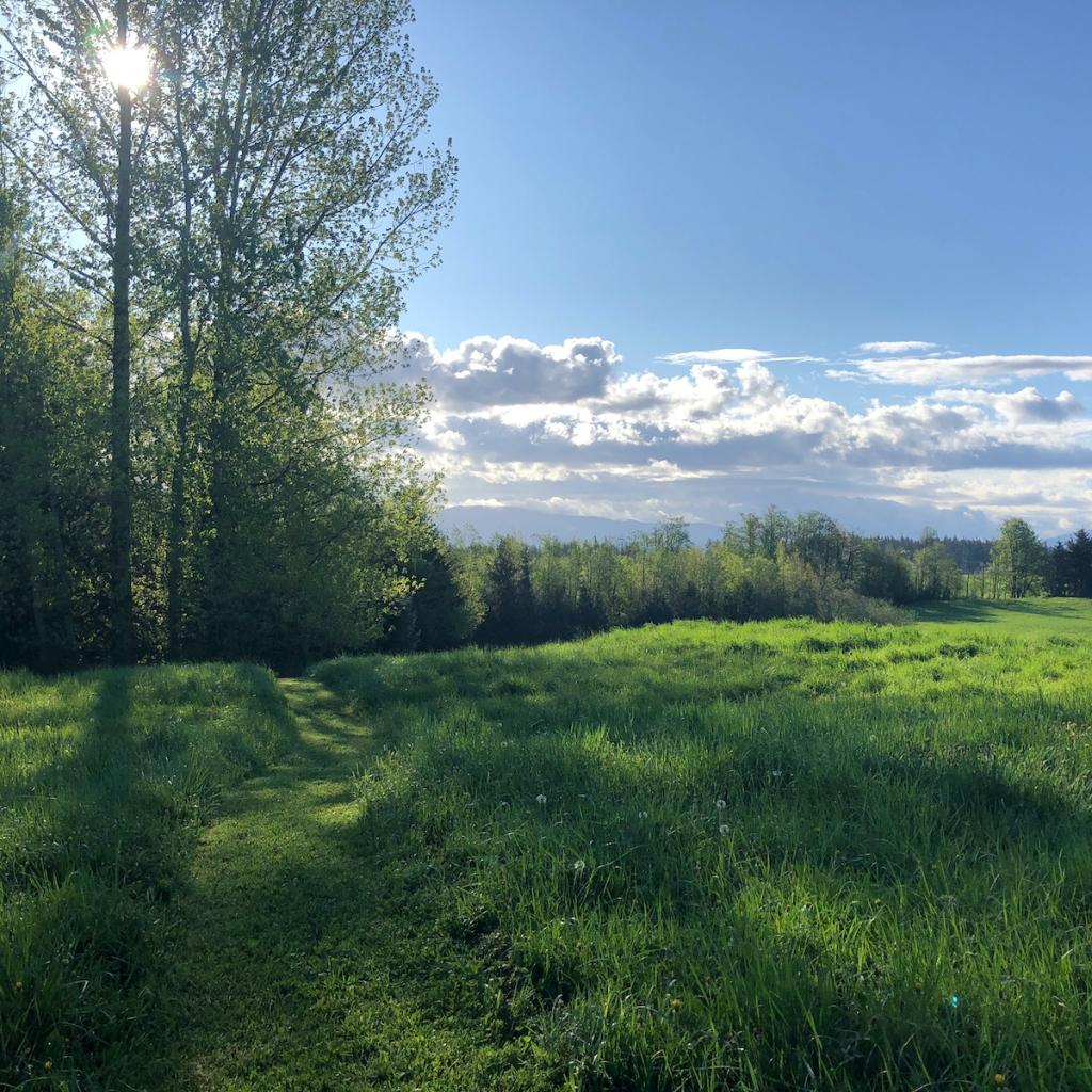 trail-through-green-meadow
