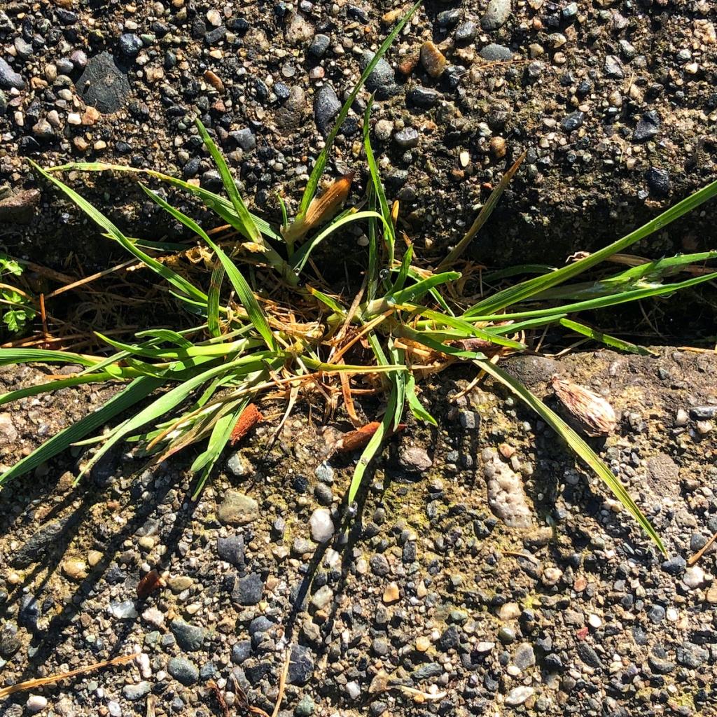 grass-grows-in-sidewalk-seam