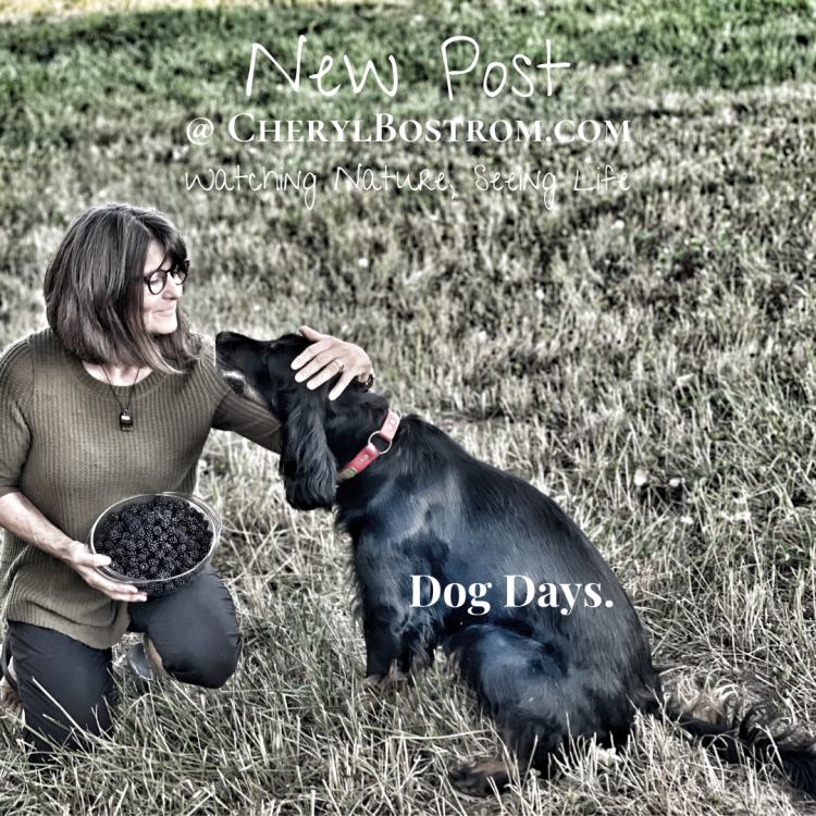 woman-and-black-dog-with-blackberries-new-post-dog-days