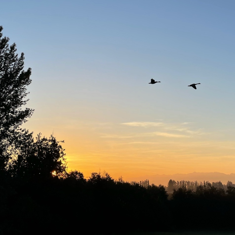 two-geese-fly-at-sunrise, sugar-birds-book, nature-photography