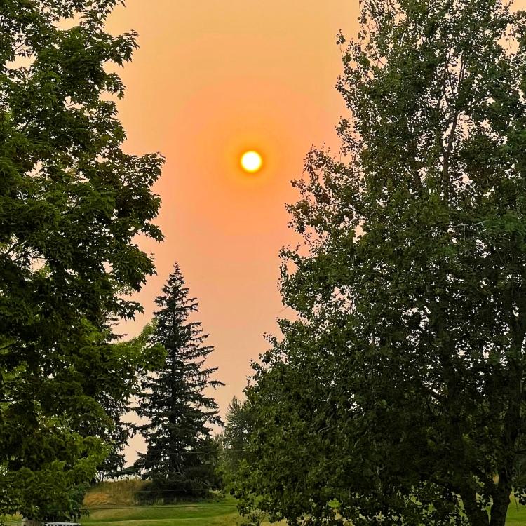 smoky-red-sky-through-trees