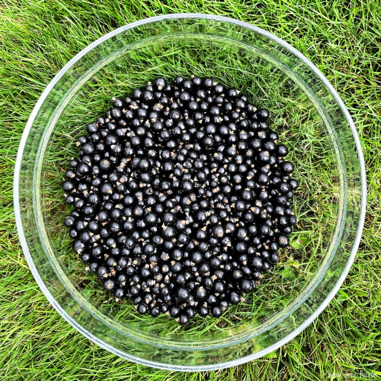 black-currants-in-clear-bowl-on-lawn, rural-photography,