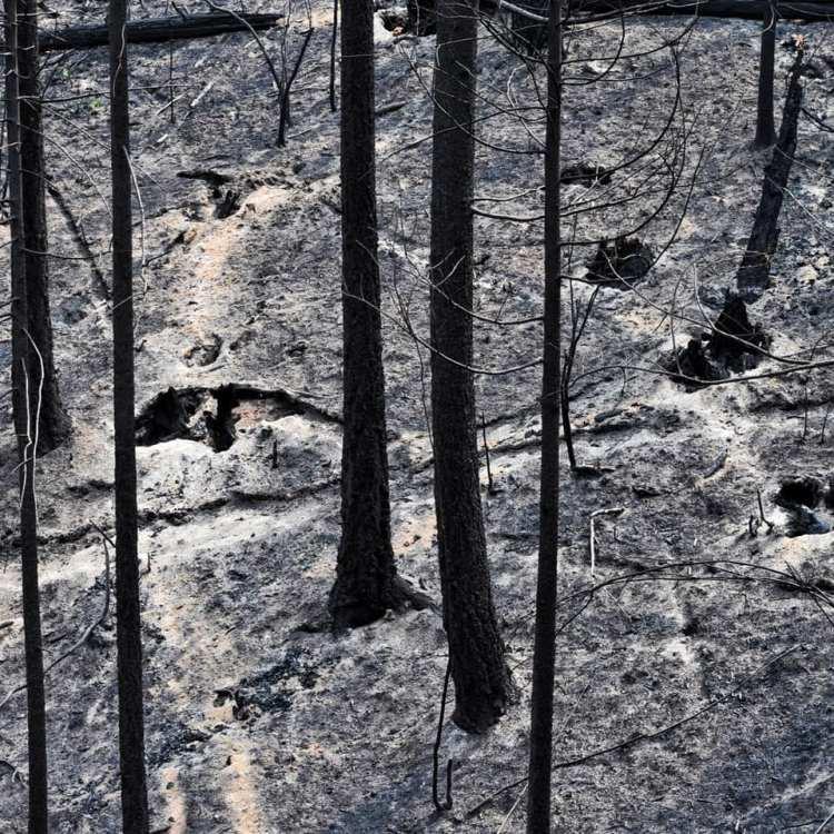 ash-shadows-stump-holes-burned-trees